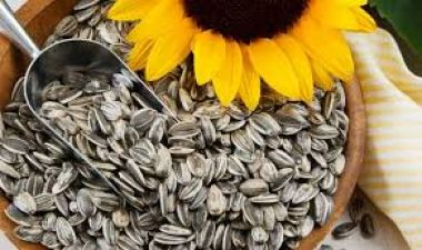 Know all the nutritional values of Sunflower Seeds