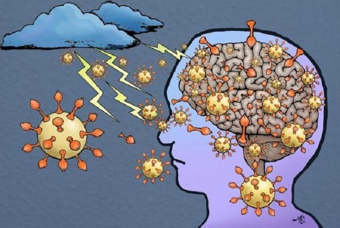 कोरोना वायरस मस्तिष्क को नहीं करता है संक्रमित: अध्ययन