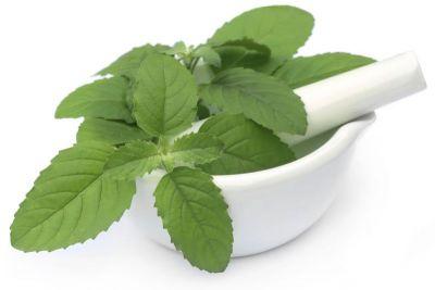 Intake of Basil leaves in pregnancy, avoid many diseases