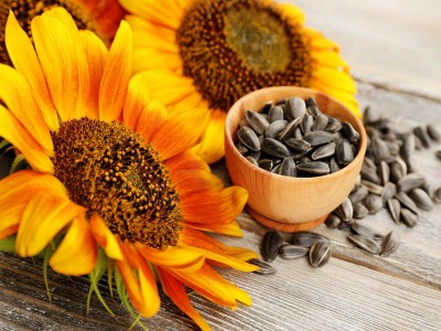 Sunflower seeds are useful for reducing weight, Know magical benefits