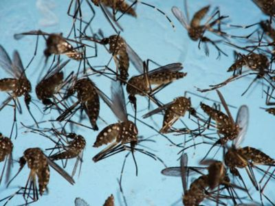 3 suspected cases of dengue reported: Shahjahanpur