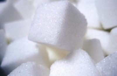 Sugar Kelp: Researchers discovers Health Benefits of Connecticut Sugar