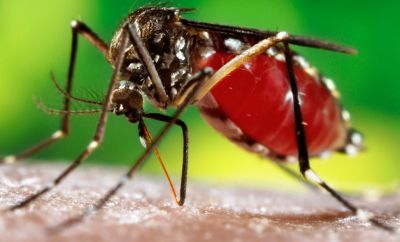 Dengue: You need to know about disease to fight it better