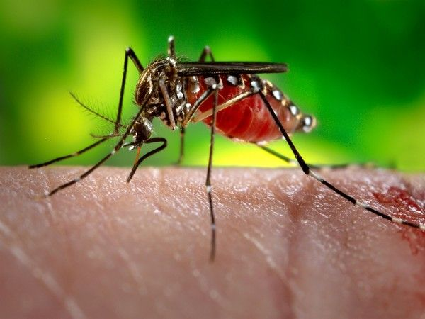 Report :94 more test positive for Zika virus in Rajasthan