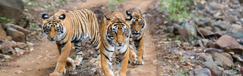 वे 5 अभयारण्य और राष्ट्रीय उद्यान जिनका आप मध्य प्रदेश में उठा सकते है आनंद