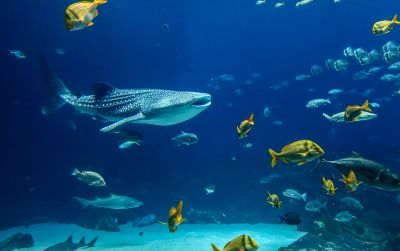 Want to live a life underwater?: Underwater adventure