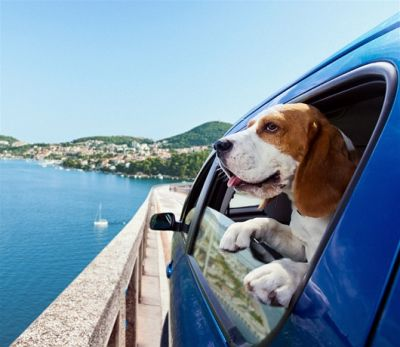 Traveling made easy with the pets with these tips
