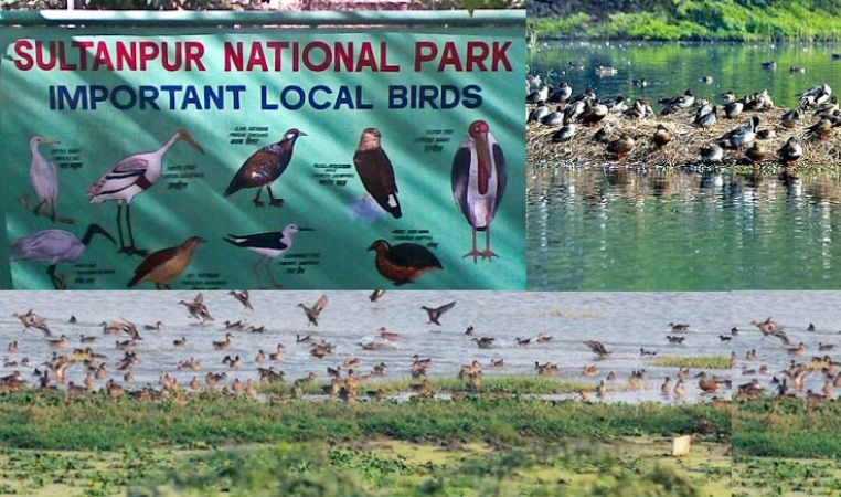 Enjoy the beauty of birds coming from Siberia, Europe, and Afghanistan at Sultanpur National Park