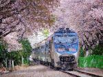 ये है दुनिया के अद्भुत और आश्चर्यजनक रेलवे ट्रैक
