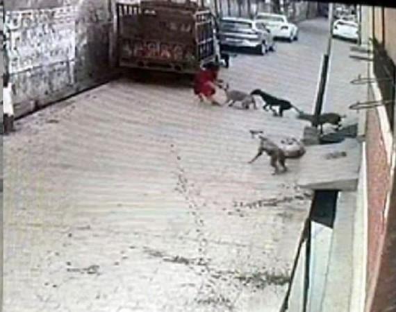 7 साल की मासूम बच्ची पर एक साथ टूट पड़े 12 आवारा कुत्ते, नोच-नोचकर किया बुरा हाल