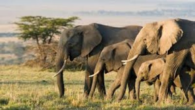 IFS officer did an experiment to save farms from elephants