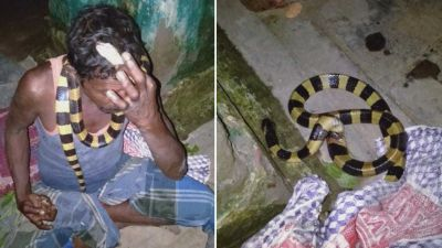 Man killed Rare species snake and hanged it around neck, police register case and sent accused to jail