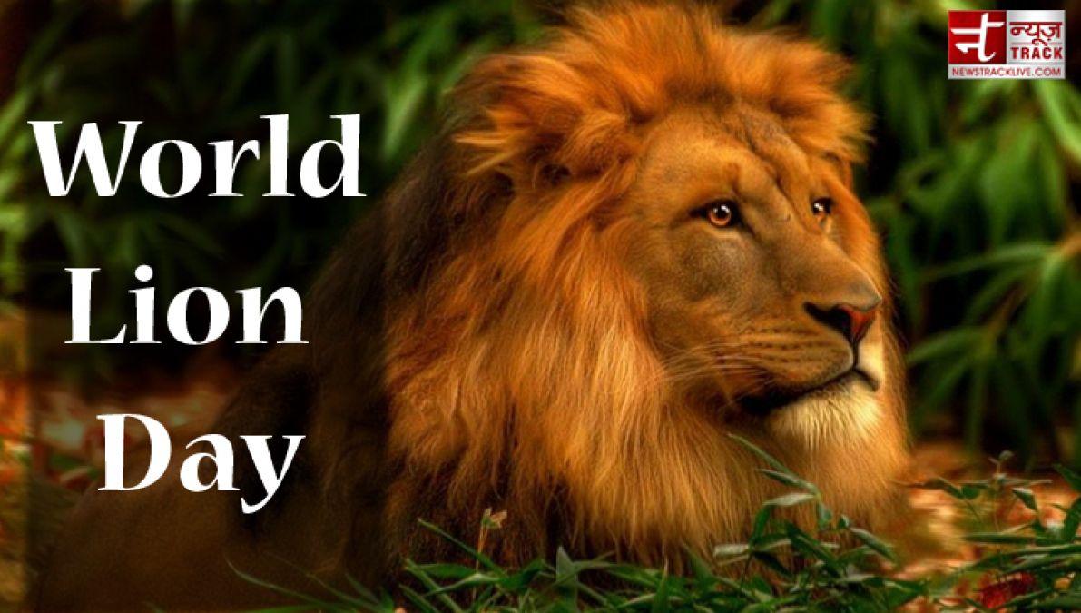 वर्ल्ड लायन डे: सिर्फ पुस्तकों और चित्रों में सिमट कर रह गया 'जंगल का राजा'