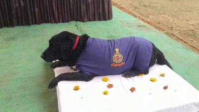 Madhya Pradesh: police dog drove several crooks to jail, won the award and now retires