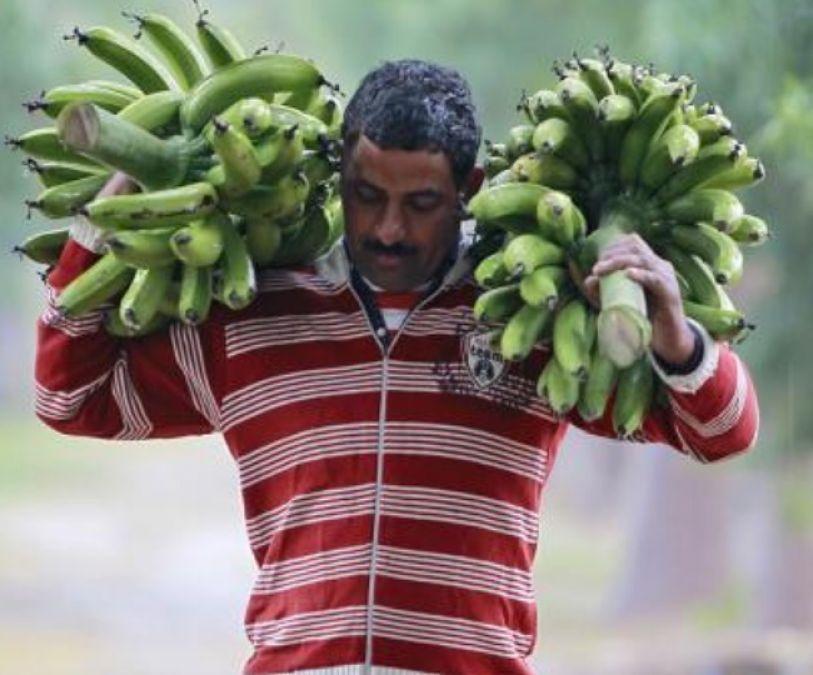 Scientists warns, Banana will be