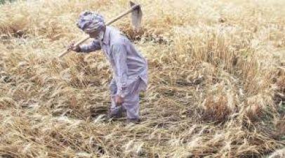 Uttar Pradesh: Debt-ridden farmer puts Kidney on sell