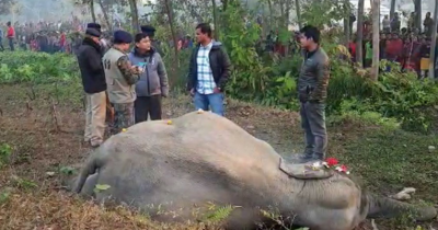 Two elephants collided with the train but three elephants died
