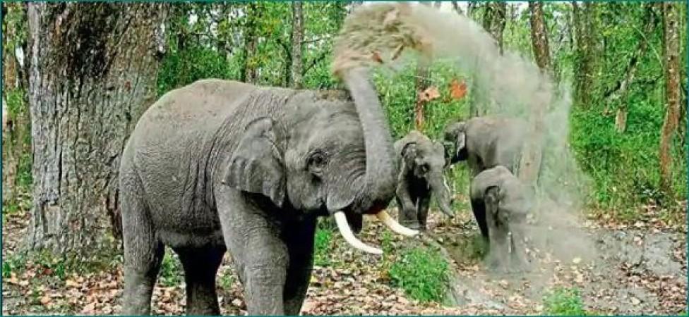 सीधी में जंगली हाथियों ने मचाया आतंक, तीन लोगों को दी मौत
