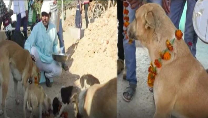 इस गाँव में आयोजित किया गया 150 कुत्तों का शाही भोज, एक घटना से दुखी होकर किया गया आयोजन