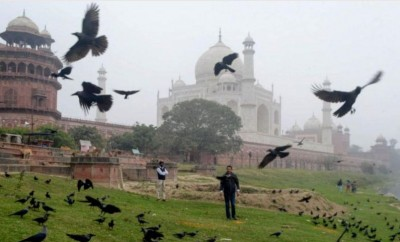 UP government impose ban on import of birds due to bird flu