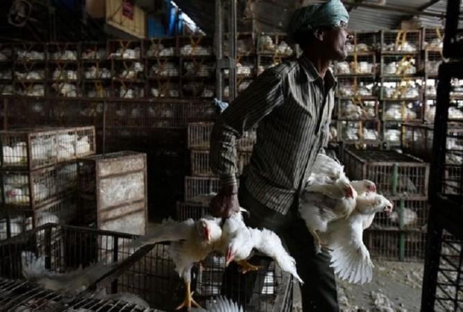 बर्ड फ्लू के बीच राहत भरी खबर, एशिया की सबसे बड़ी 'मुर्गा मंडी' के सभी सैंपल नेगेटिव