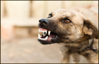 Four Year Innocent Killed By Dogs In Punjab, Know The Matter