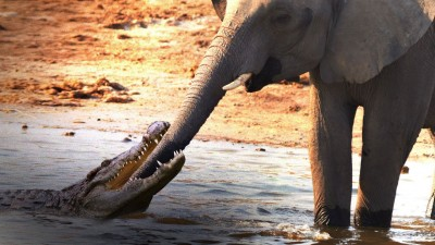 Video of elephant, crocodile goes viral on social media