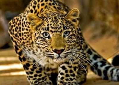 Birthday cake helps Madhya Pradesh brothers escape leopard