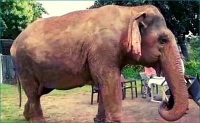 World's oldest elephant Vatsala health gives positive response