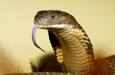 World Snake Day: These things related to snakes will blow your mind