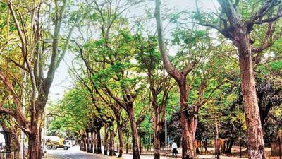 Hundreds of trees uprooted for arbitrary, sand-for-forgiveness in Rajasthan