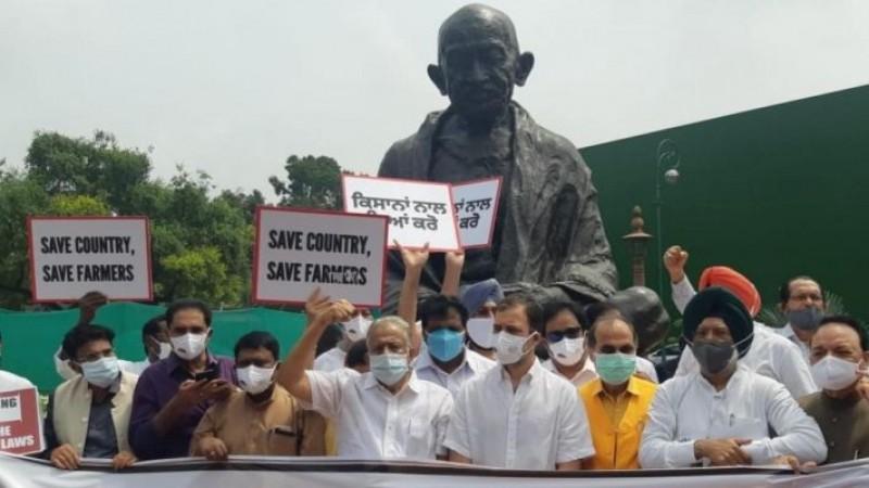 संसद परिसर में कृषि कानूनों के खिलाफ प्रदर्शन, राहुल गांधी सहित कई कांग्रेस सांसद शामिल