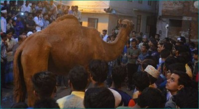 Telangana Government bans Camel slaughter in the state