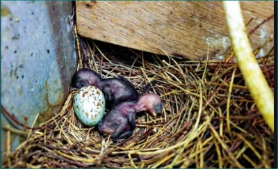 People of this village remained 35 days without light for bird and its children