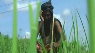 Palamu farmers have been suffering from drought for the past five years, condition is worst this year