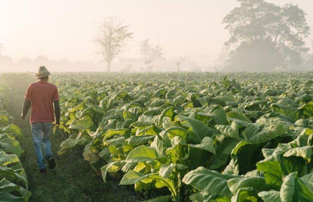 सोलन में होगी कृषि उत्पादों का व्यापार बढ़ाने के लिए बैठक