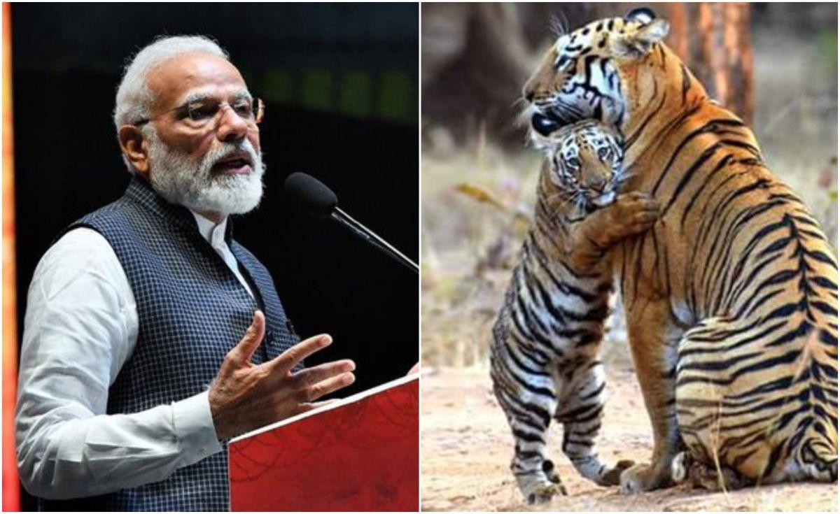 बाघों के मामले में अव्वल है मध्य प्रदेश, पीएम मोदी ने जारी किए आंकड़े