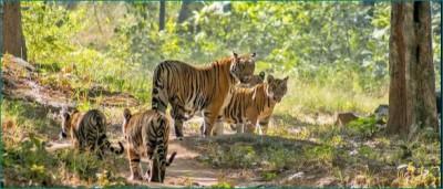 Satpura Tiger Reserve wins NatWest Group Earth Heroes Award