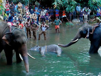 Ruthless death of pregnant elephant in state with highest literacy rate