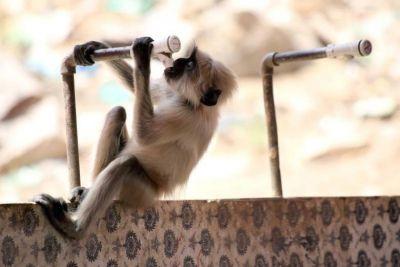 Sun spews fire in Madhya Pradesh, killing 15 monkeys due to heat