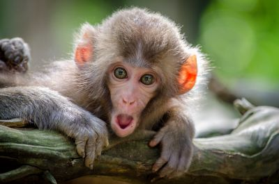 monkey attacked the couple on bike, death