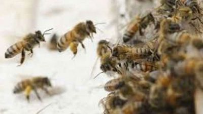 Two children hit by bees in Noida Sting, one killed, another one in serious condition
