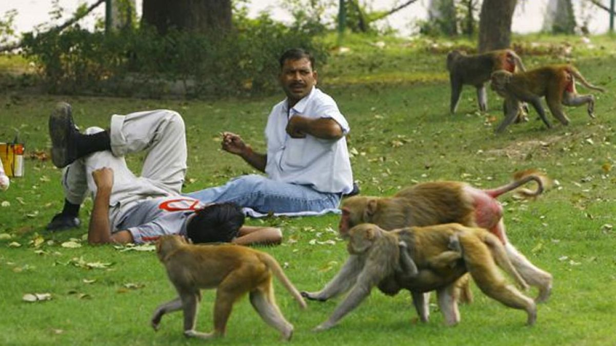 People who are fed up with the mischief of monkeys, administration is not taking action