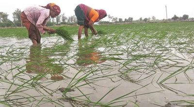Farmers troubled by the delayed monsoon, not getting Kharif crops seeding