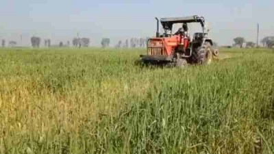 Farmer runs tractor on 4 acres standing wheat crop, protesting against agri law