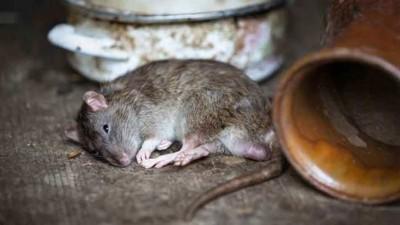 After criminals, 'Rat Encounter' will start in Bagpat