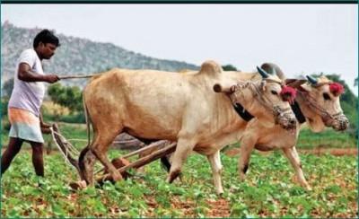 3000 crore rupees to be given under 'CM Kisan Kalyan' scheme