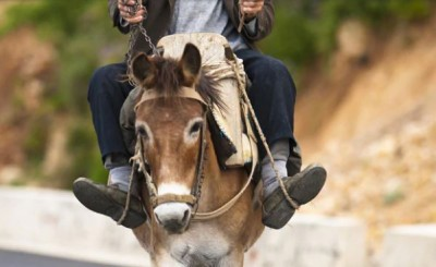 Unique tradition for 90 years, sat son-in-law on donkey and roams
