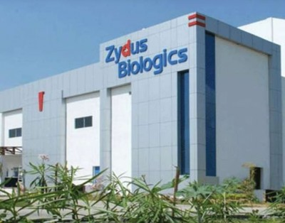 India may get another corona vaccine, Zydus Cadila asked for human trial of antibody cocktail