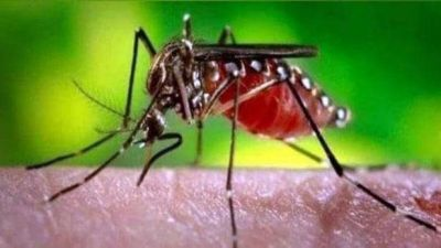 Dengue wreaks havoc in  Nepal, number of patients increased
